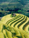 Honghe Hani Terraces, a miracle of rice farming, are located in Southwestern China, Yunnan Province, Yuanyang County. Photo by Ma Liwen, Courtesy of Qiu BaoXing. (Science).
